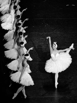 Swan Lake's premiere in Montreal