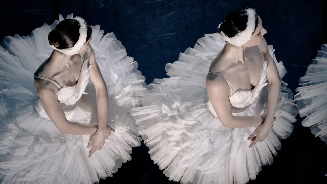 Swan Lake's white swans on stage